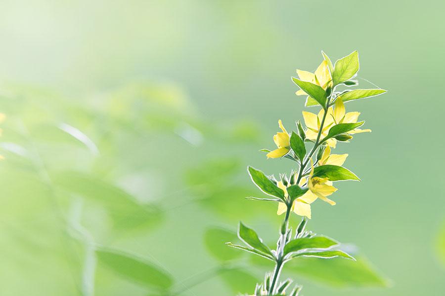 green-flower-900px
